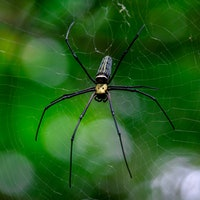A revolution in 3D printing could help scientists speak to spiders