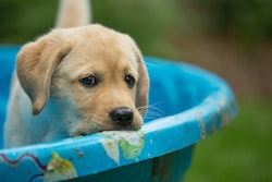 This summer, pick out one of these durable pools for your pup to swim in all summer long.