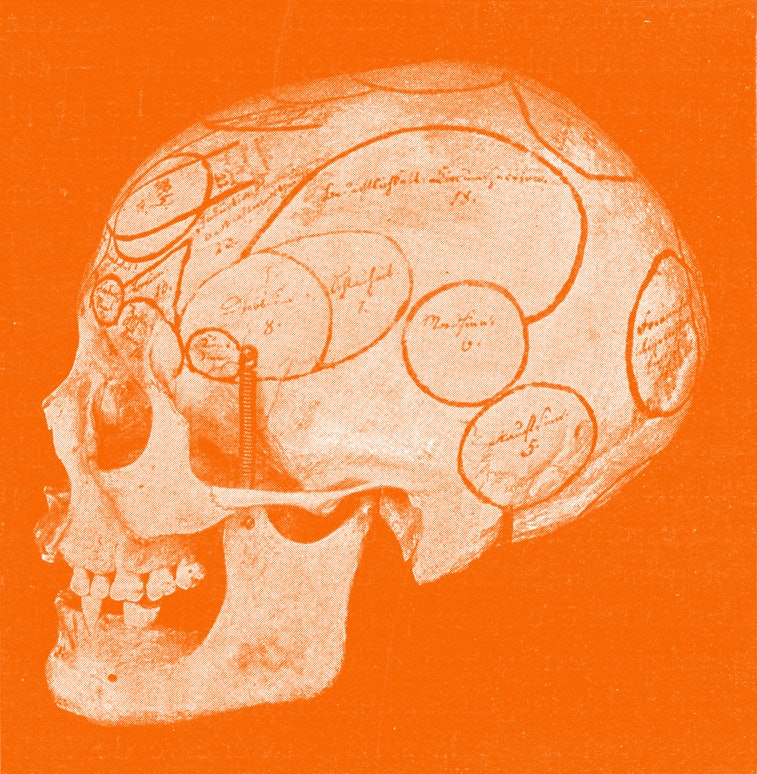Skull with indication of Gall organs seen from side and back, vintage photo. From the Universe and H...