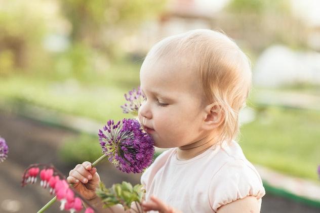 Cute baby girl smelling purple onion flower in the garden