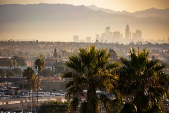 Famous Los Angeles palm trees with a polluted, smoggy Downtown in the background. Focus on foregroun...