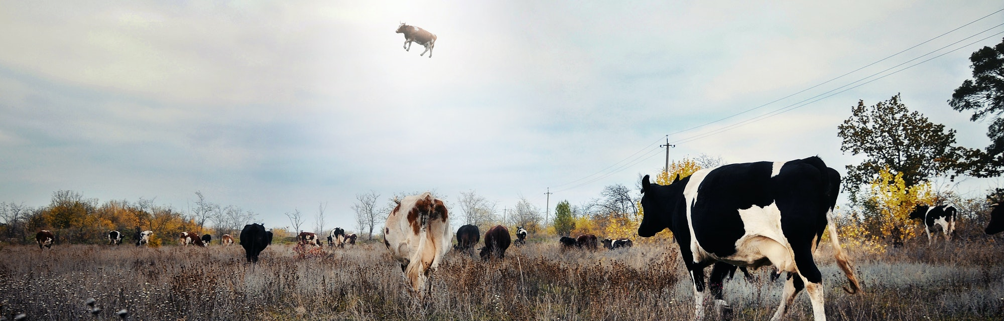 Landscape with cows and UFO. Photo with 3d rendering element