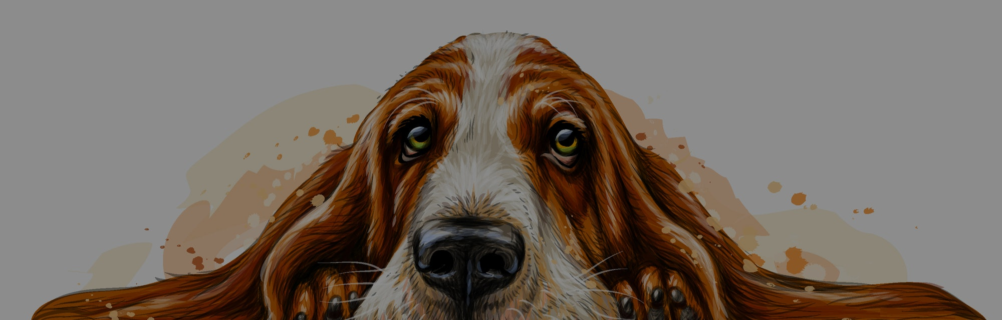 Dog breed Basset Hound. The sticker on the wall in the form of a color art drawing of a portrait of ...