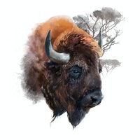 How the noble buffalo could save America from ecological devastation
