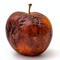 Rotting apples, decay and food waste concept with photograph of unhealthy decayed bad apple isolated...