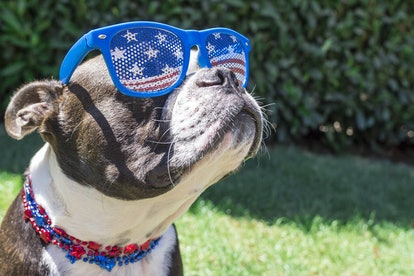 Consider dressing up your pet for the Fourth of July weekend.