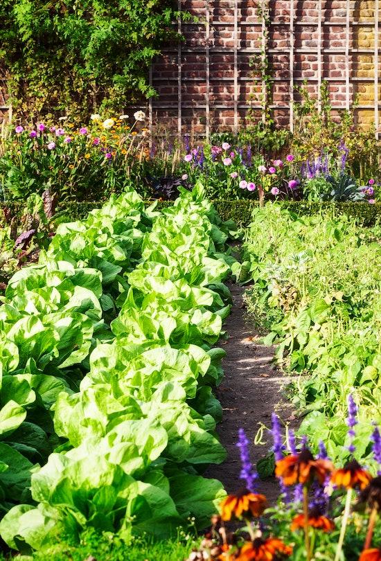 Vegetable garden in late summer. Herbs, flowers and vegetables in backyard formal garden. Eco friend...