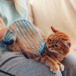Brushing cat with glove to remove pets hair. Woman taking care of animal combing it with hand rubber...