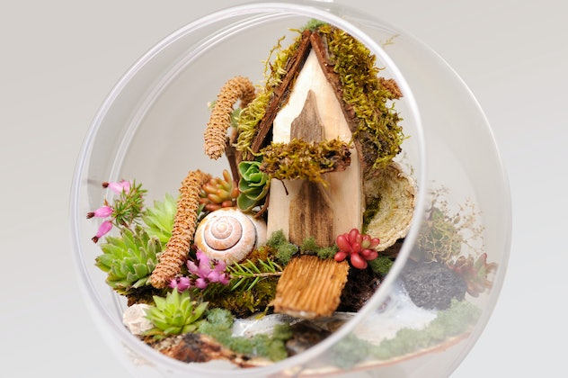 Close-up image of a terrarium with succulents, moss, and small cottage perched inside.