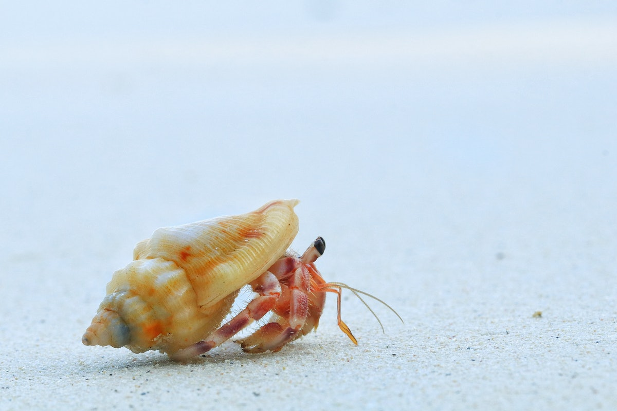 Close up of cute hermit crab carry beautiful shell crawling on the white sand beach in warm sunlight...