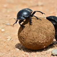 One form of human pollution is causing insects to fight each other