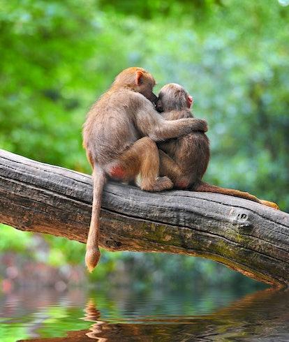 Cute monkeys embracing on tree