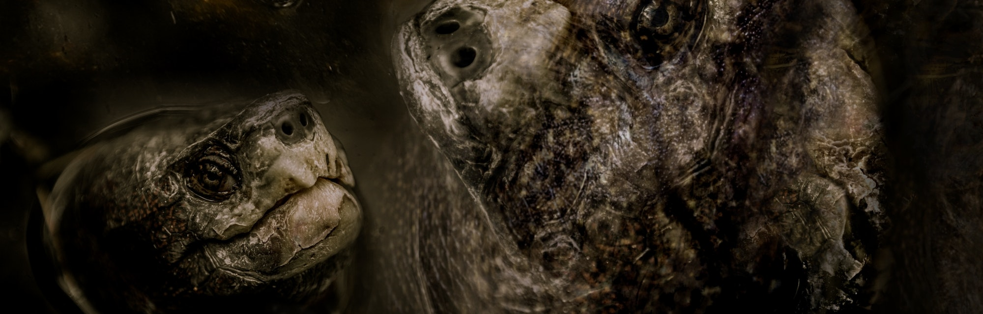 Horrible hallucination with aquatic turtle monster, imaginary creature, scary and creepy nightmare, ...