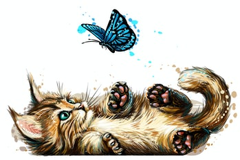 Cat. A kitten is playing with a butterfly. Wall sticker with the image of a blue-eyed Maine Coon kit...