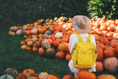 Back view on woman with backpack is picking pumpkins at pumpkin patch at farm market. Thanksgiving h...