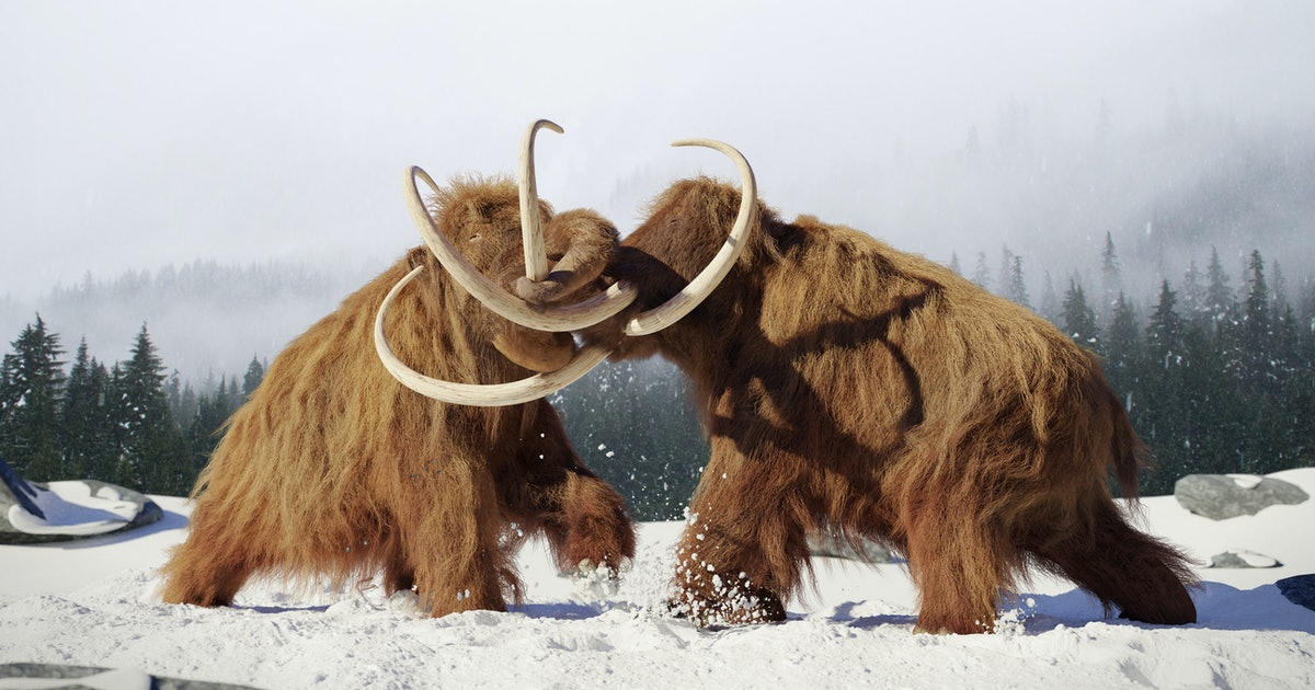 After 10,000 years of extinction, this is when woolly mammoths will walk the Earth again