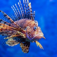 How one fish's fear of being eaten could save the ocean
