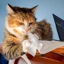 Cat shredding paper invoice. Concept for: tired of bills. Environment friendly paper shredder. The a...