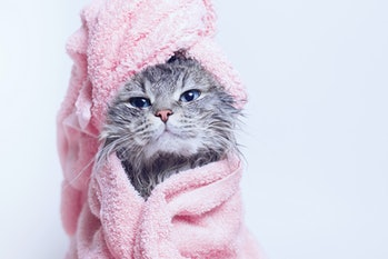 Funny smiling wet gray tabby cute kitten after bath wrapped in pink towel with blue eyes. Pets and l...