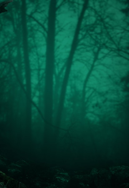 Old mossy trees on blue misty scary forest background. Halloween landscape with leafless crooked bra...