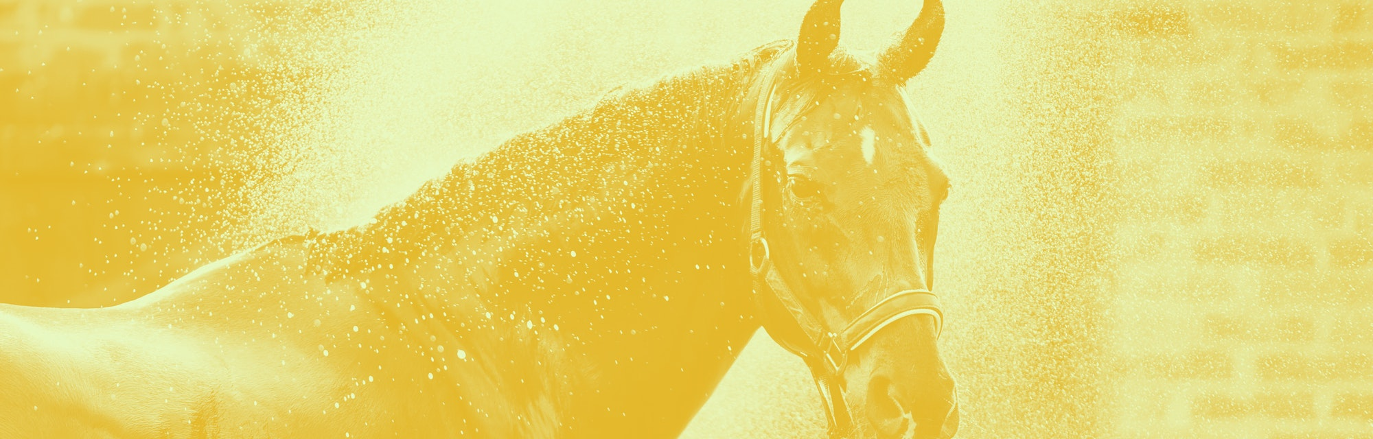 Horse portrait in spray of water. Horse shower at the stable