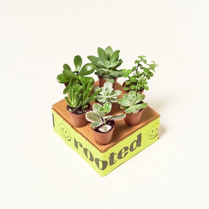 Baby Desert Box: image 1