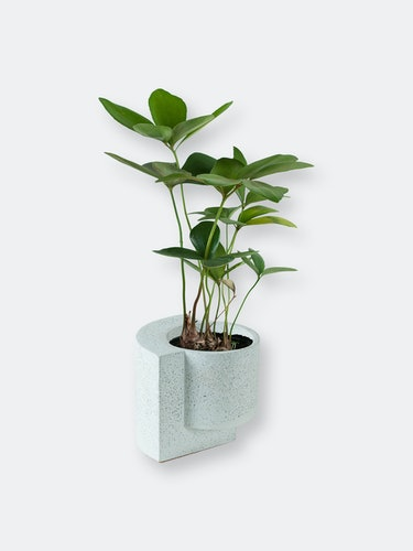Platform Planters, Yin Yang Planter Set (One Medium Graphite and One Small White): additional image