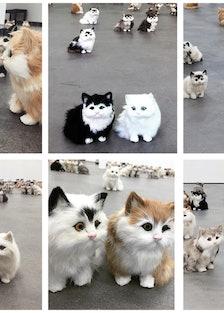 steph_cats_720.jpg