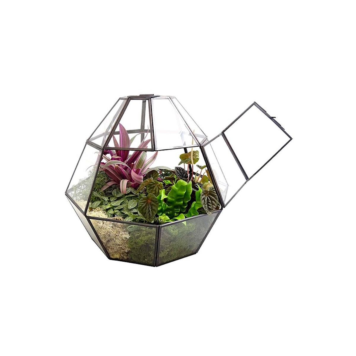 luludi oyster greenhouse.jpg