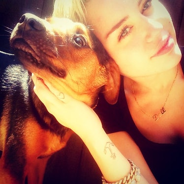 __#DogsofInstagram:__ When Miley Cyrus signed on in May 2013, she did what every self-respecting pup...