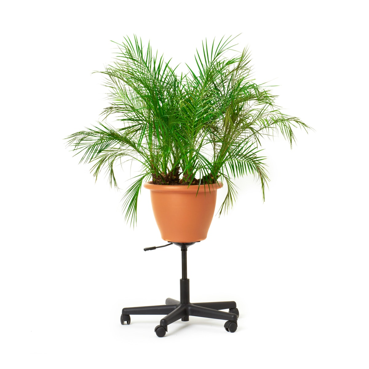 Lizzie Fitch's office planter