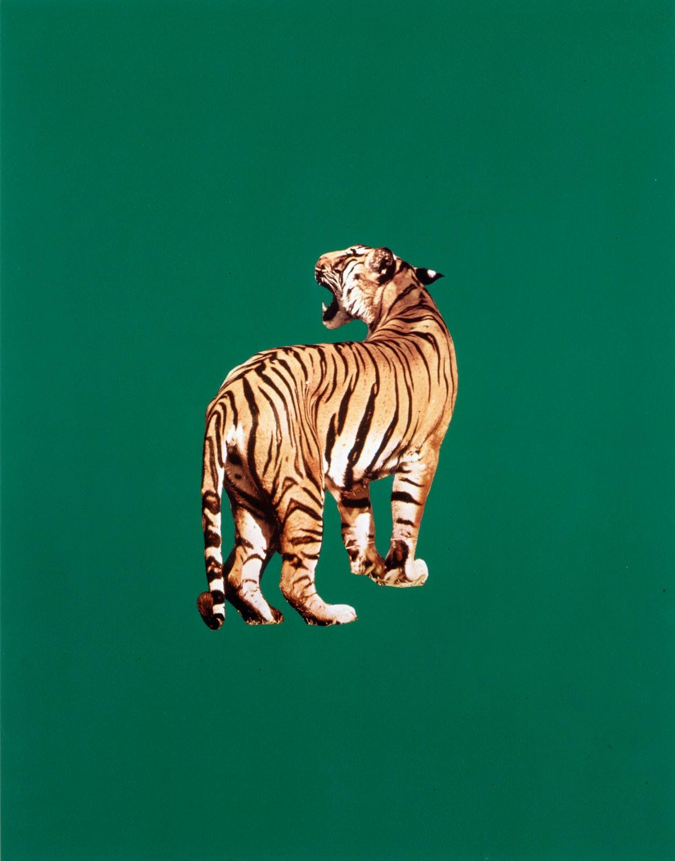 Sarah Charlesworth Tiger