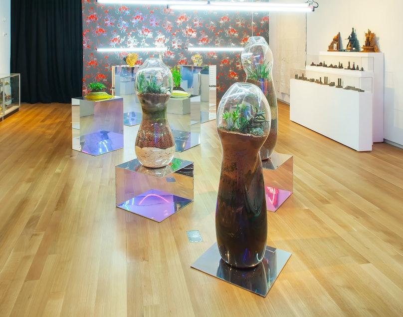 Paula Hayes terrariums