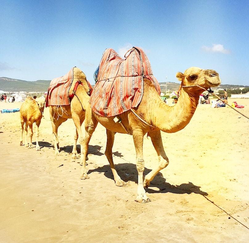 Antwaun North Africa