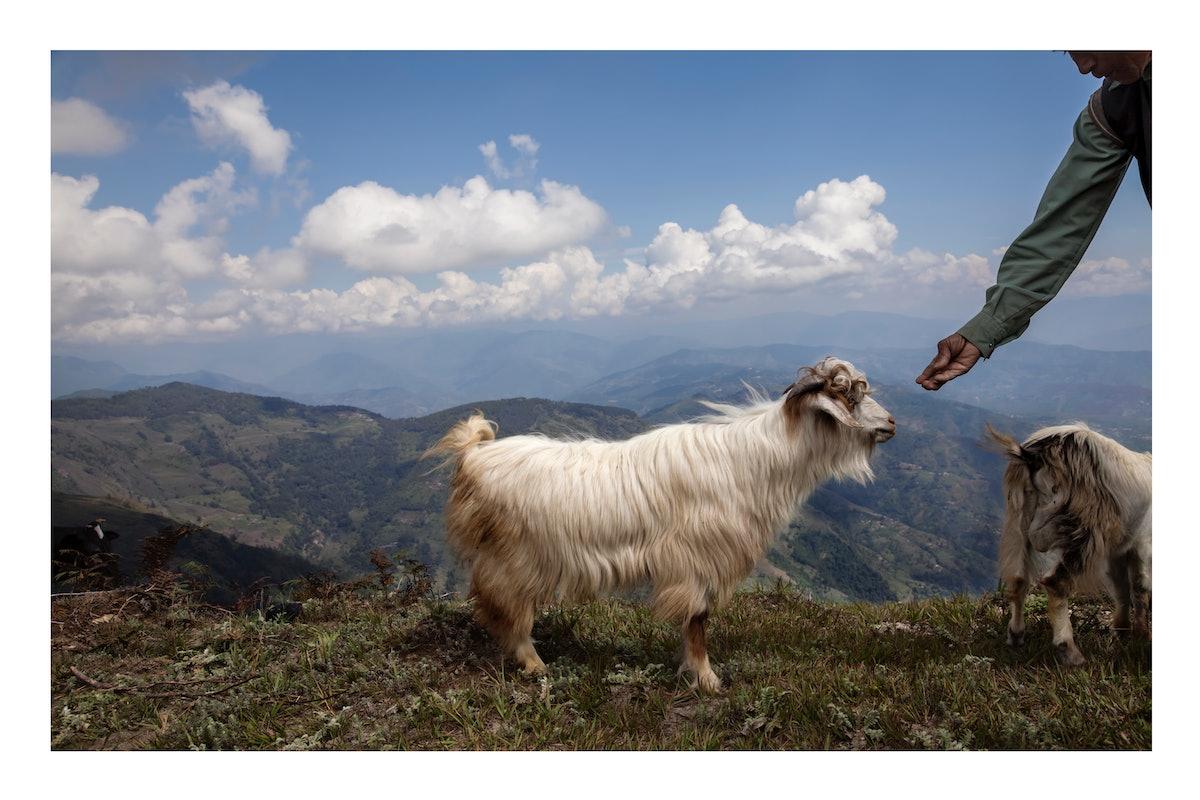 Goat on Mt. Gobre