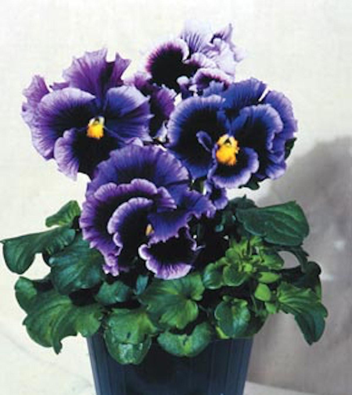 jear_flowers_05.jpg