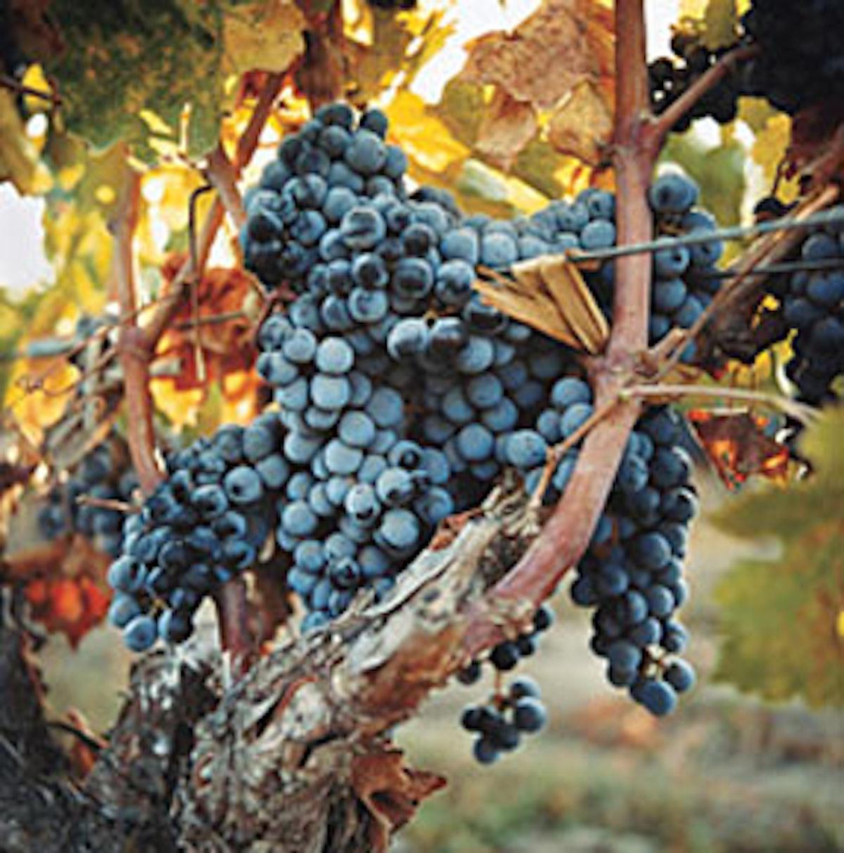 trar_wines_02.jpg