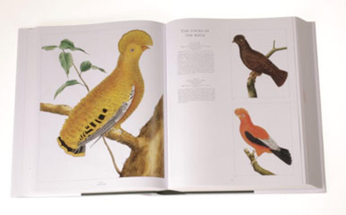 blog_art_books_bird.jpg
