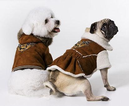 blog_cavallidogs_fleece.jpg