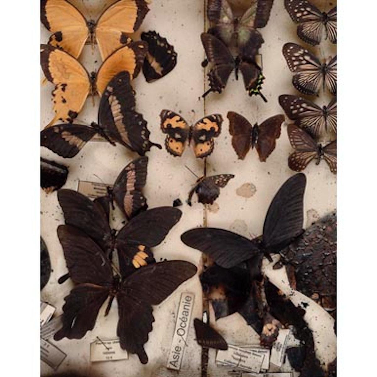 blog_deyrolles_butterflies.jpg