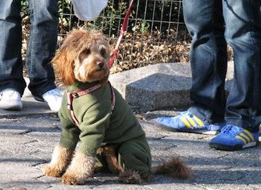 blog_dogcoats_forestgreen.jpg