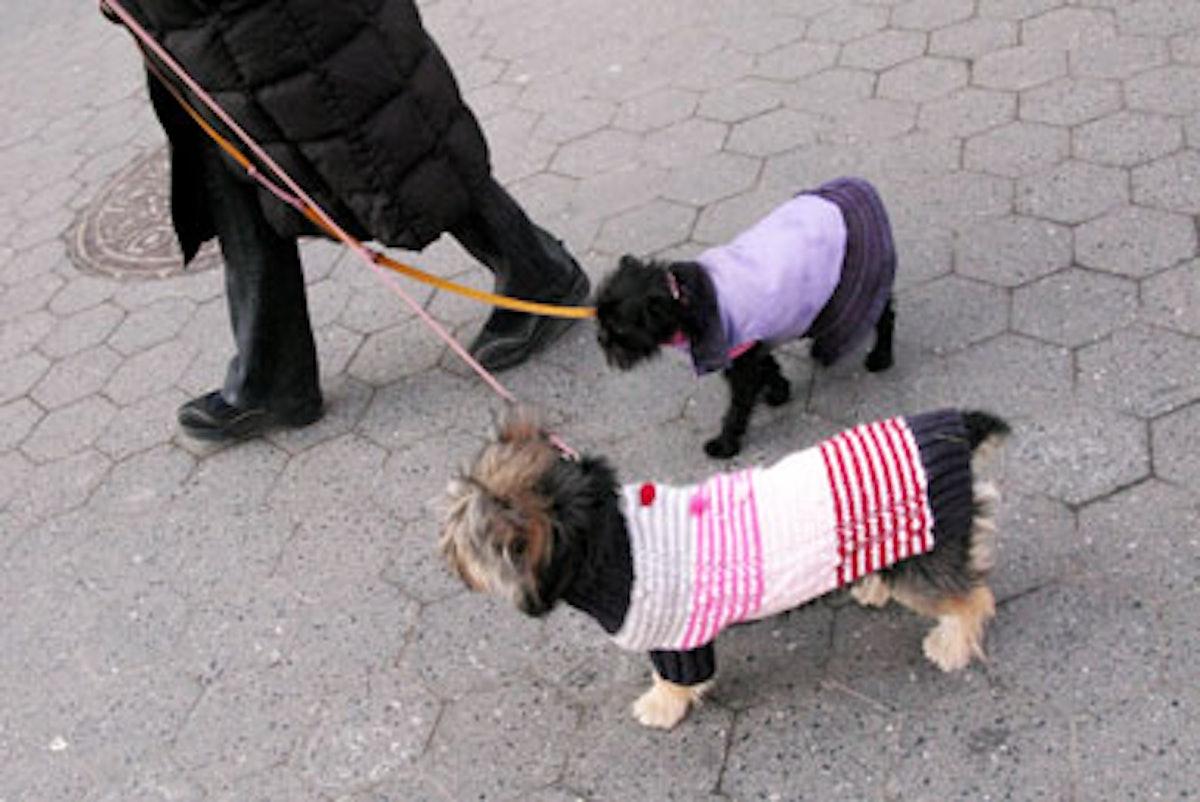 blog_dogcoats_duo2.jpg