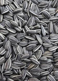 arar-sunflower-seeds-h.jpg