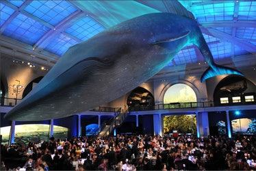 blog-AMNH-winter-gala-2012-02.jpg