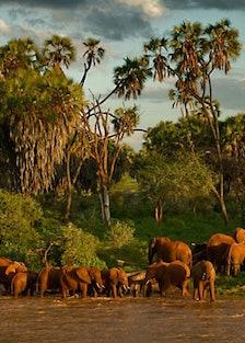 blog-elephant-watch-camp-africa-01.jpg