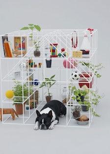 blog_dog_architecture.jpg