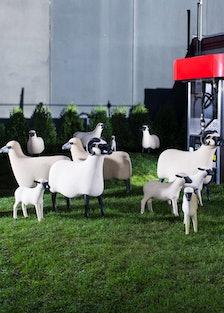 Sheep Station