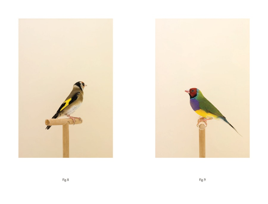 Luke Stephenson An Incomplete Dictionary of Show Birds