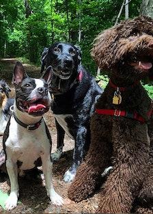 My Dogs Hike