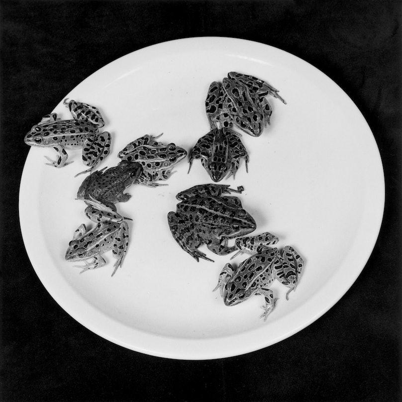Robert Mapplethorpe, Frogs, 1984.jpg